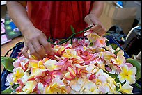 Fresh flowers used for lei making, International Marketplace. Waikiki, Honolulu, Oahu island, Hawaii, USA (color)