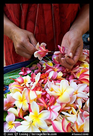 Hands preparing a fresh flower lei, International Marketplace. Waikiki, Honolulu, Oahu island, Hawaii, USA