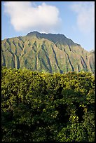 Tropical forest and fluted  Koolau Mountains. Oahu island, Hawaii, USA