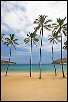Palm trees and empty beach, Hanauma Bay. Oahu island, Hawaii, USA (color)