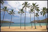 Palm trees and deserted beach, Hanauma Bay. Oahu island, Hawaii, USA
