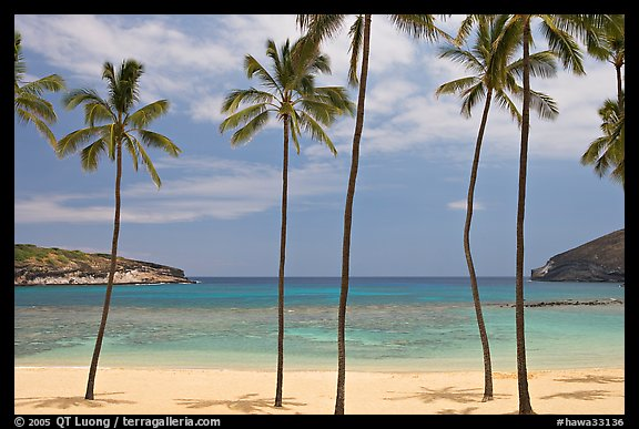 Palm trees and empty beach, Hanauma Bay. Oahu island, Hawaii, USA