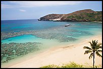 Palm tree,  beach, and Hanauma Bay with no people. Oahu island, Hawaii, USA