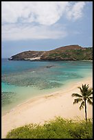 Palm tree,  beach, and Hanauma Bay with no people. Oahu island, Hawaii, USA (color)