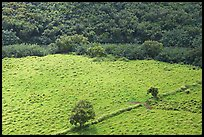 Trees, field, and ancient wall,  Wailua River Valley. Kauai island, Hawaii, USA
