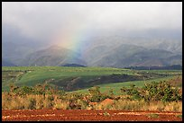 Field, hills, and rainbow. Kauai island, Hawaii, USA