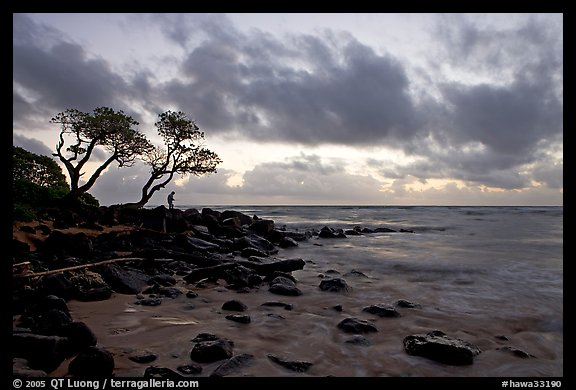 Fisherman, trees, and ocean, dawn. Kauai island, Hawaii, USA (color)
