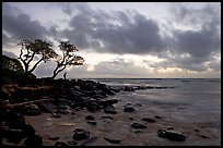 Fisherman, trees, and ocean, dawn. Kauai island, Hawaii, USA