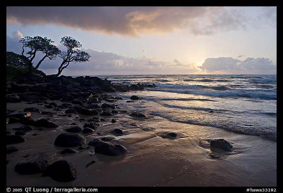 Windblown trees and ocean, Lydgate Park, sunrise. Kauai island, Hawaii, USA