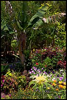 Flowers and banana tree, National Botanical Garden Visitor Center. Kauai island, Hawaii, USA