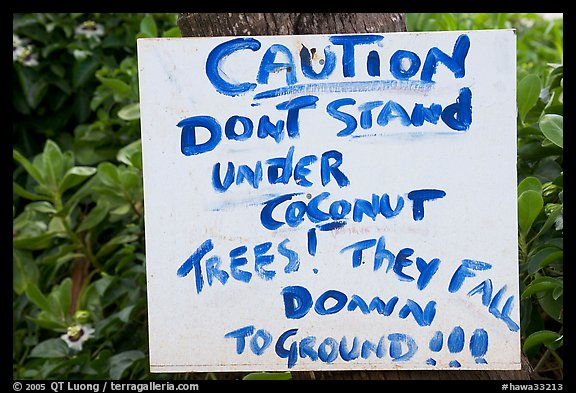Hand written sign cautioning against falling coconut. Kauai island, Hawaii, USA (color)