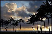 Palm trees and clouds, Kapaa, sunrise. Kauai island, Hawaii, USA (color)