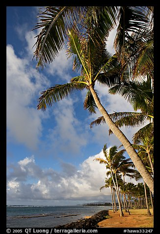 Palm trees and ocean, Kapaa, early morning. Kauai island, Hawaii, USA (color)