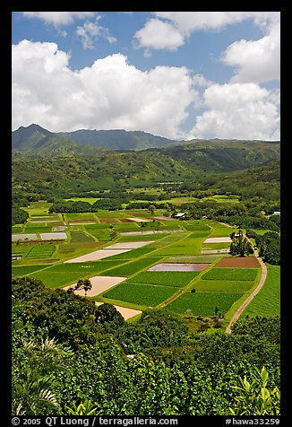 Patchwork of taro fields seen from Hanalei Lookout, mid-day. Kauai island, Hawaii, USA (color)