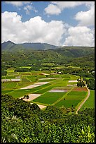 Patchwork of taro fields seen from Hanalei Lookout, mid-day. Kauai island, Hawaii, USA