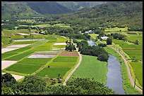 Taro fields and Hanalei River. Kauai island, Hawaii, USA
