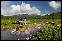 Plantation workers with truck, Hanalei Valley, afternoon. Kauai island, Hawaii, USA (color)