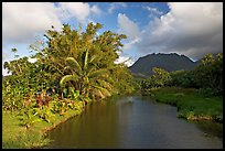 River near Hanalei. North shore, Kauai island, Hawaii, USA ( color)