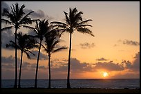 Coconut trees, Kapaa, sunrise. Kauai island, Hawaii, USA ( color)
