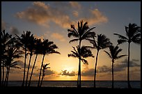 Palm trees, sunrise, Kapaa. Kauai island, Hawaii, USA