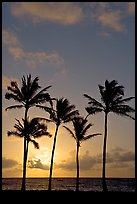 Cocunut trees, sunrise, Kapaa. Kauai island, Hawaii, USA ( color)