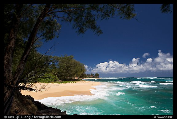 Horsetail Ironwoods framing beach with turquoise waters  near Haena. North shore, Kauai island, Hawaii, USA (color)
