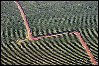 Aerial view of coffee plantations. Kauai island, Hawaii, USA