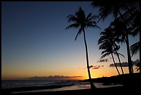 Palm trees and beach, Salt Pond Beach, sunset. Kauai island, Hawaii, USA (color)