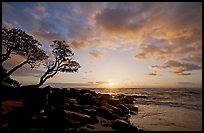 Wind twisted trees and sunrise, Lydgate Park. Kauai island, Hawaii, USA