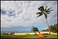 Tents and palm trees, Haena beach park. North shore, Kauai island, Hawaii, USA