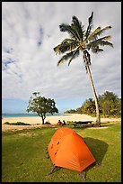 Tent and palm trees, Haena beach park. North shore, Kauai island, Hawaii, USA ( color)