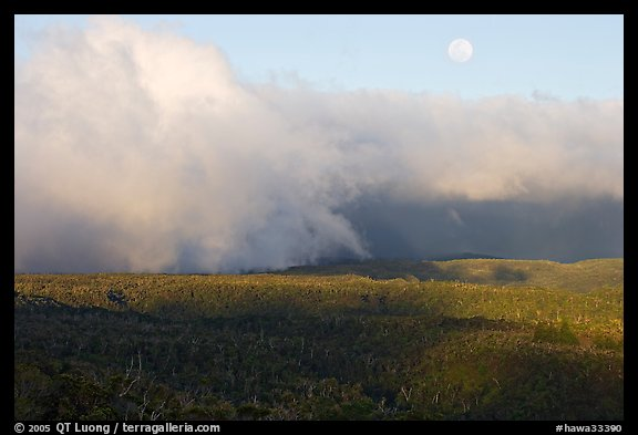 Alakai Swamp and clouds,  sunset. Kauai island, Hawaii, USA