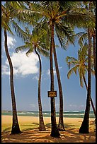 Coconut trees, with warning sign, Salt Pond Beach. Kauai island, Hawaii, USA