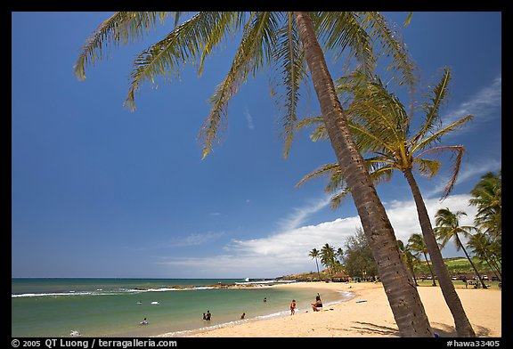 Coconut trees and Salt Pond Beach, mid-day. Kauai island, Hawaii, USA