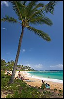 Palm tree, Sheraton Beach, mid-day. Kauai island, Hawaii, USA