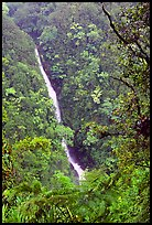 Kahuna Falls (400 feet high). Akaka Falls State Park, Big Island, Hawaii, USA (color)