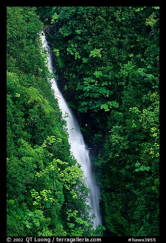 Kahuna Falls in a lush valley. Akaka Falls State Park, Big Island, Hawaii, USA