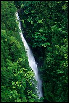 Kahuna Falls in a lush valley. Akaka Falls State Park, Big Island, Hawaii, USA (color)