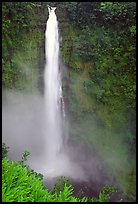 Akaka Falls on Kolekole stream. Akaka Falls State Park, Big Island, Hawaii, USA (color)
