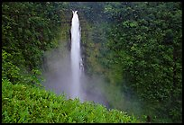 Pictures of Akaka Falls State Park