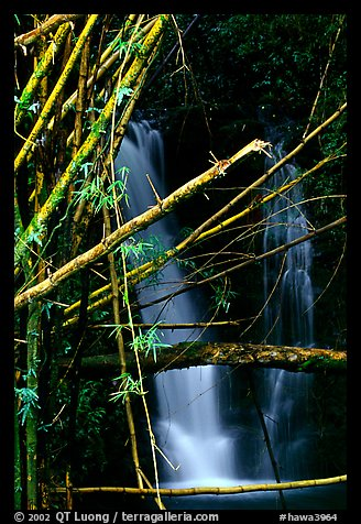 Bamboo branches and waterfall. Akaka Falls State Park, Big Island, Hawaii, USA