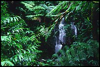 Waterfall amidst lush vegetation. Akaka Falls State Park, Big Island, Hawaii, USA (color)