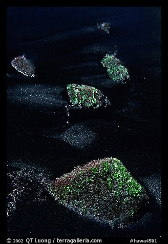 Mossy rocks and black sand, Punaluu black sand beach. Big Island, Hawaii, USA