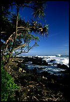 Trees and waves, Keanae Peninsula. Maui, Hawaii, USA