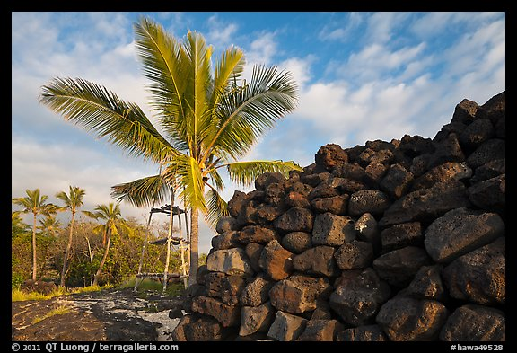 Heiau wall and palm tree, Kaloko-Honokohau National Historical Park. Big Island, Hawaii, USA