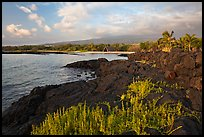 Lava shoreline, Kaloko-Honokohau National Historical Park. Big Island, Hawaii, USA (color)