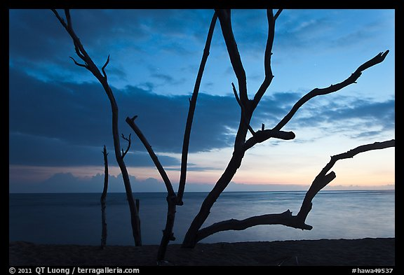 Tree skeleton and Honokohau Bay, sunset, Kaloko-Honokohau National Historical Park. Big Island, Hawaii, USA