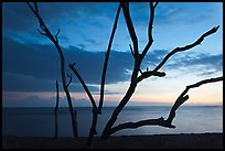Tree skeleton and Honokohau Bay, sunset, Kaloko-Honokohau National Historical Park. Hawaii, USA