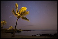 Palm tree ocean under sky with stars, Kaloko-Honokohau National Historical Park. Hawaii, USA