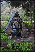 Hut, Waipio Valley. Big Island, Hawaii, USA (color)